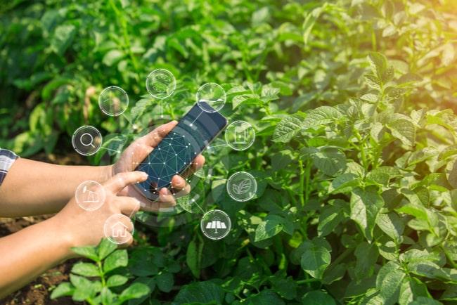 Lantbrukare sitter ned i odling och håller i en mobiltelefon.